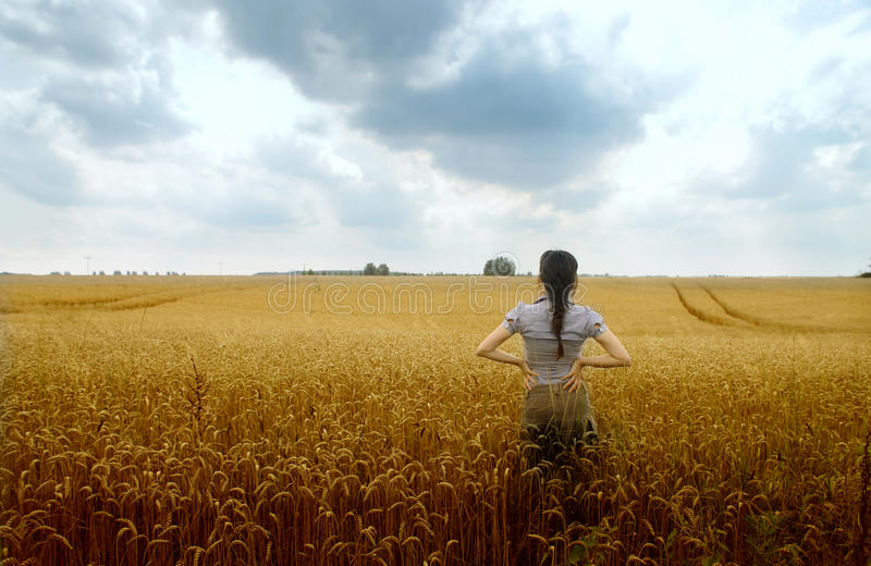 Download Agriculture stock photo. Image of agriculture, corn, summer - 15939662