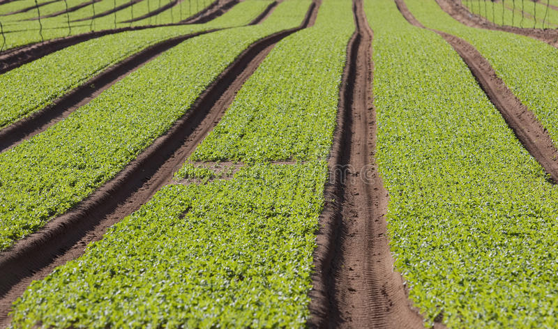 Download Agriculture stock photo. Image of green, farming, abstract - 16021368