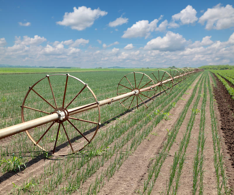 Download Agriculture stock image. Image of field, selective, outdoor - 19936337