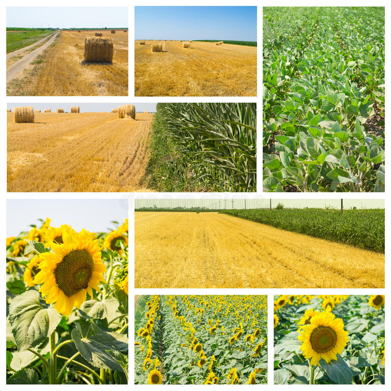 Agriculture. Collage made of photos about agriculture royalty free stock photos