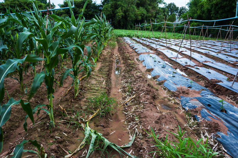 Download The agriculture stock image. Image of farm, plastic, rural - 26552905
