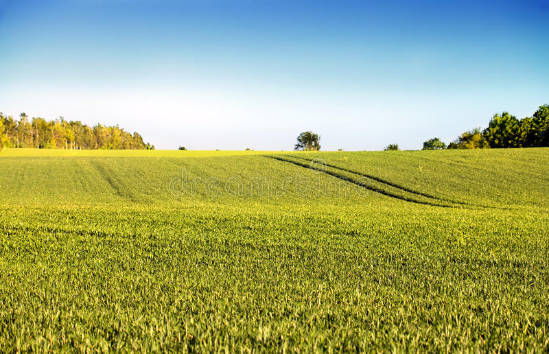 Download Agriculture stock photo. Image of field, blue, agriculture - 27541050