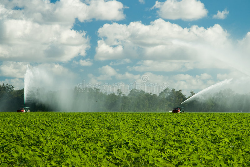 Watering plantation royalty free stock images