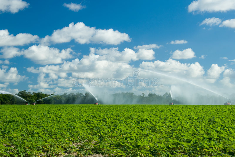 Trucks irrigating green field. Scenic view of trucks irrigating lush green field in countryside, blue sky and cloudscape background royalty free stock images
