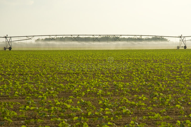 Irrigating crops in field. Scenic view of water irrigating crops in countryside field stock images