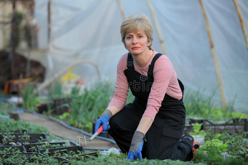 Agriculture, agriculteur féminin en serre chaude photographie stock libre de droits