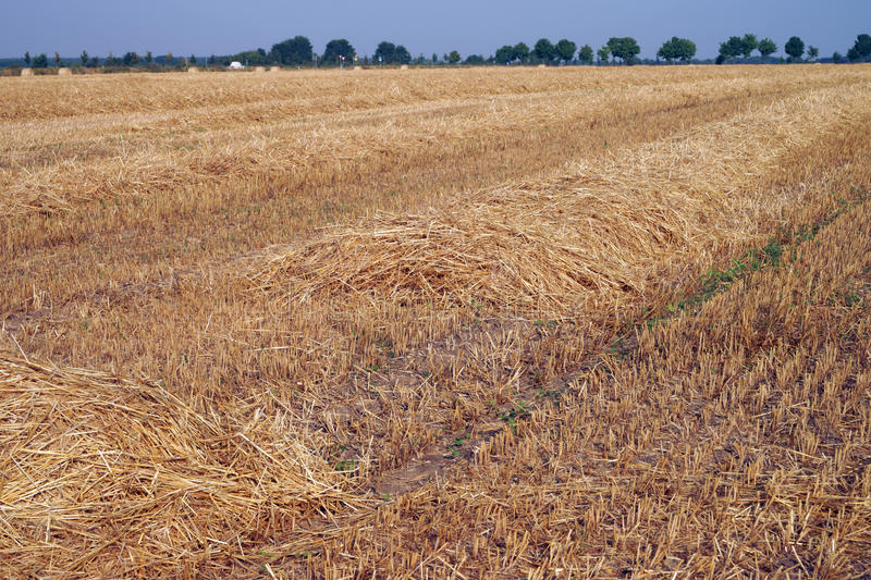 Download Agriculture stock photo. Image of summer, field, time - 39505148
