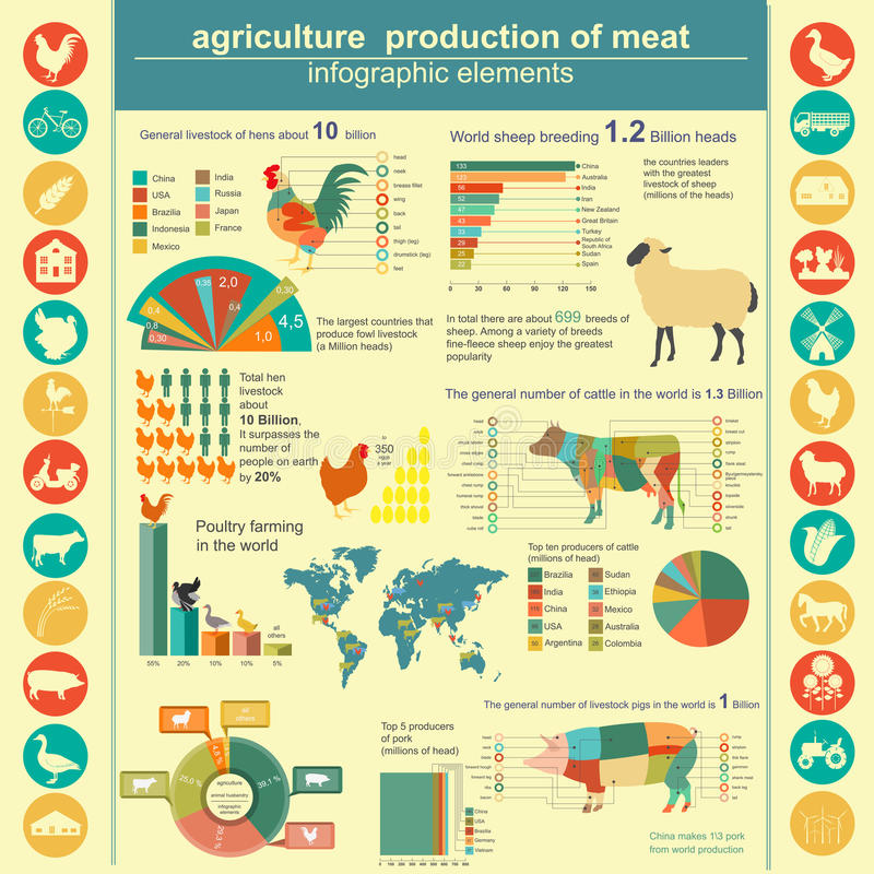 Agriculture, animal husbandry infographics. Vector illustrationstry info graphics. Vector illustration vector illustration