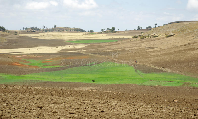 Agriculture area - Ethiopia royalty free stock image