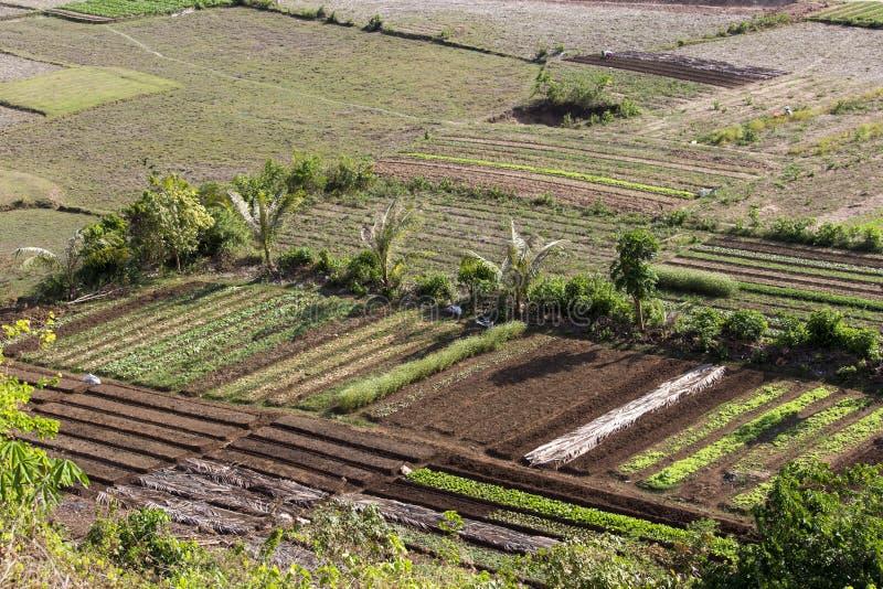 Agriculture au Vietnam du Nord image stock