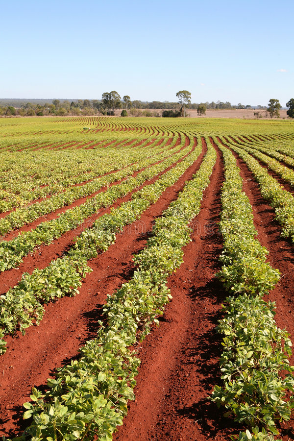 Agriculture aujourd'hui photos stock