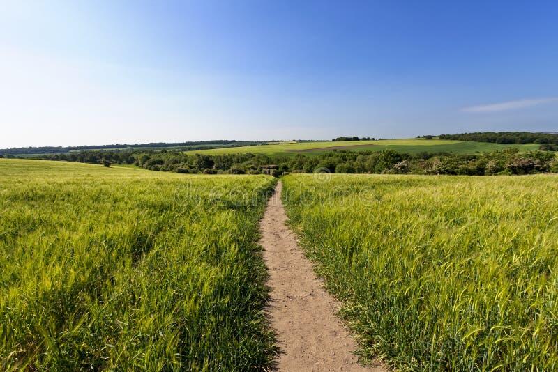 Agriculture avec le chemin public image libre de droits