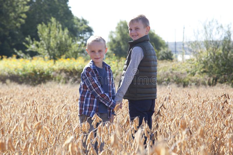 Agriculture children outside. Brothers exploring a field holding hands, looking back at the camera on an autumn day stock photo
