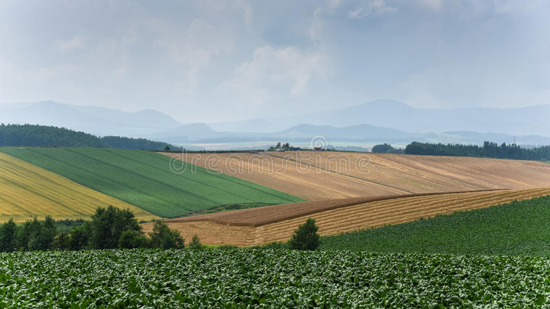 Agriculture in cloudy day in sapporo Japan stock photo