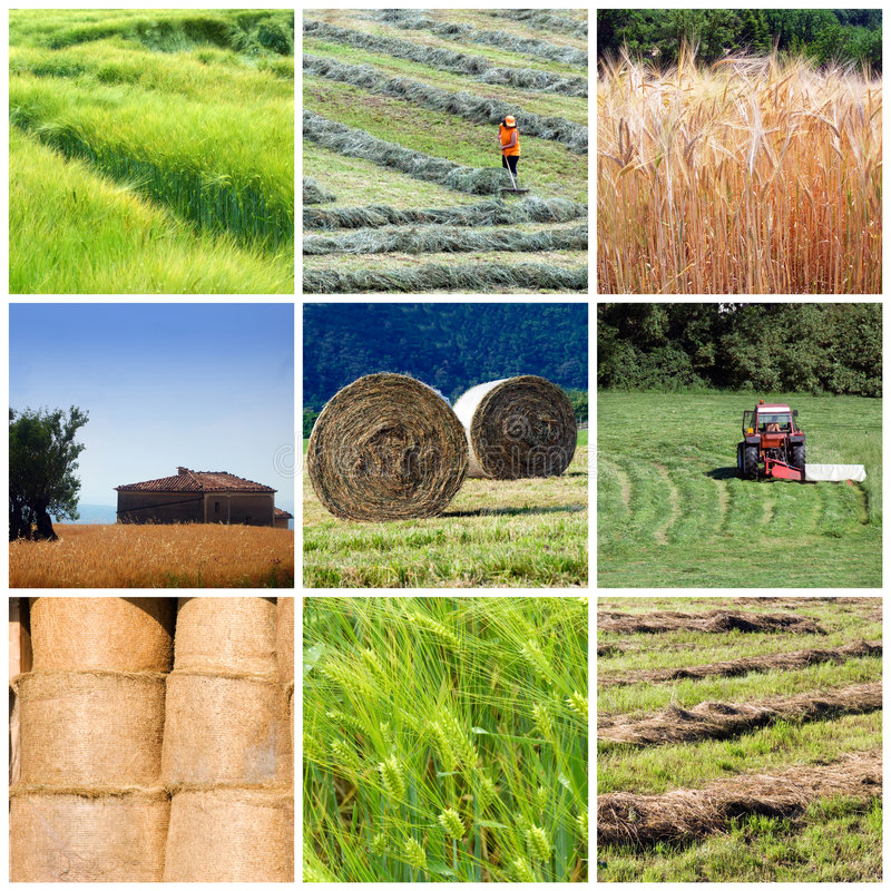 Free Agriculture Collage Stock Photography - 6132122