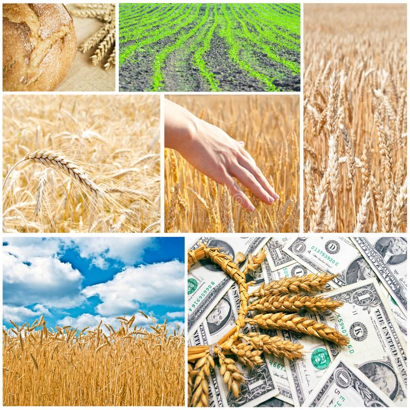 Agriculture collage royalty free stock images