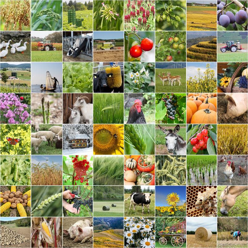 Agriculture collage from farming and products stock images