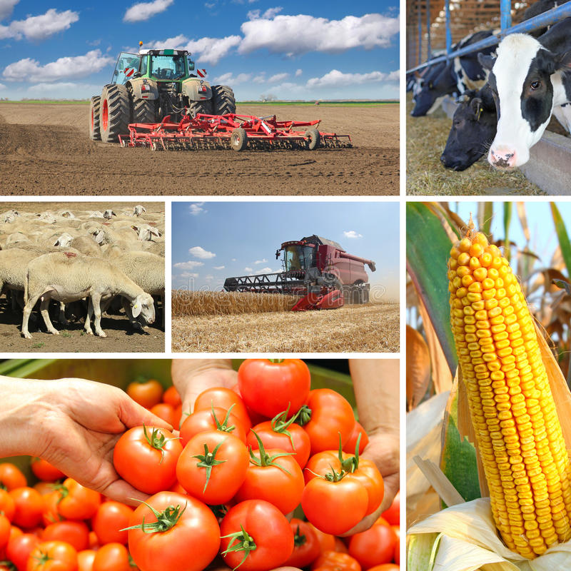 agriculture - collage stock photo