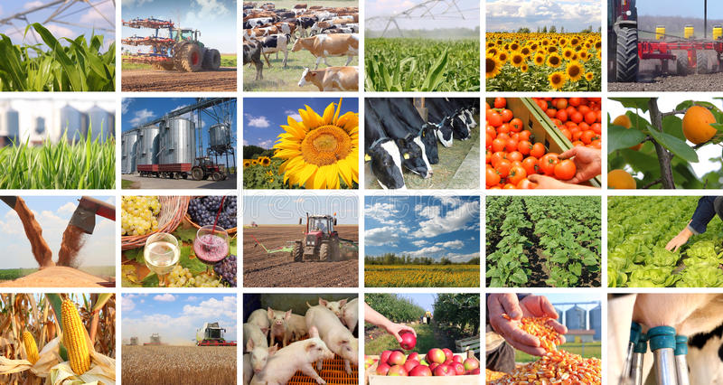 Agriculture in collage stock photography