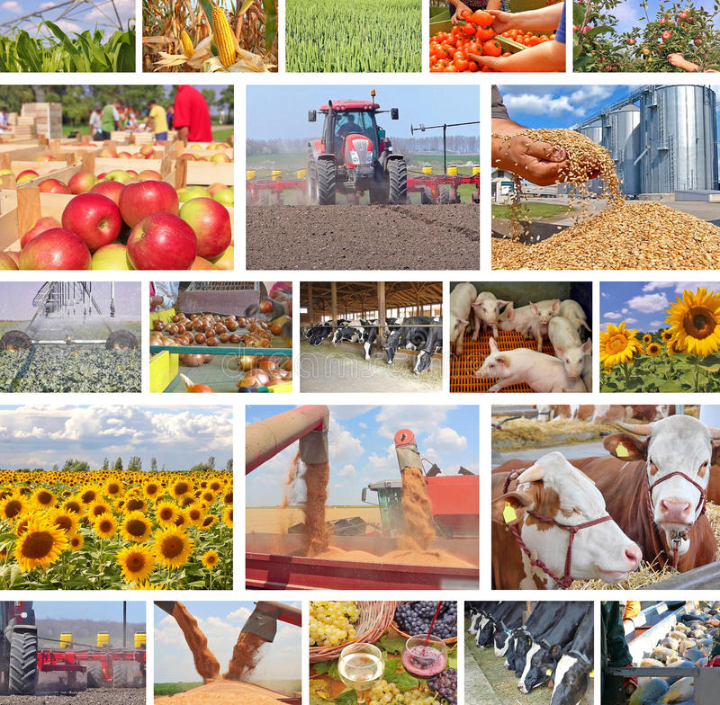Agriculture in collage royalty free stock image
