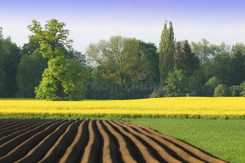 Download Agriculture in colour stock image. Image of field, raps - 1468859