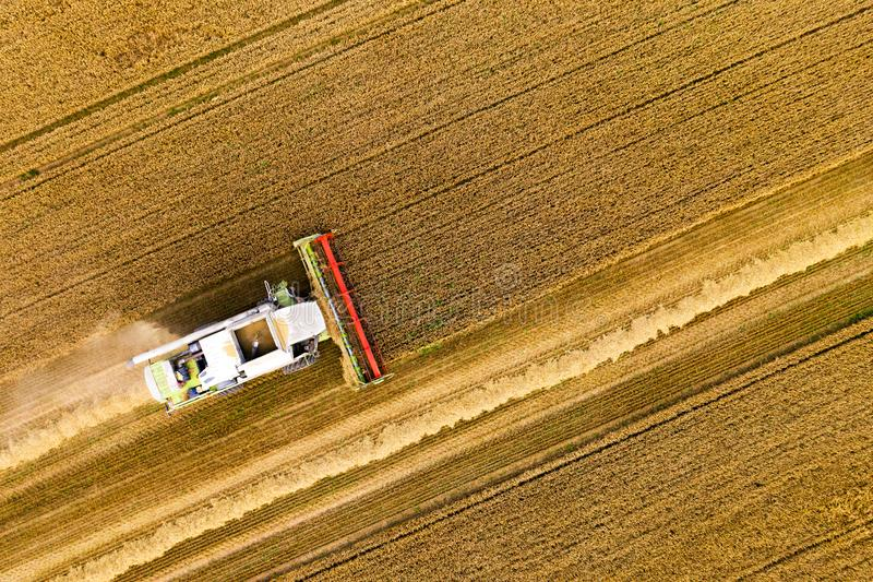 Agriculture. Combine harvester working in wheat field stock photography