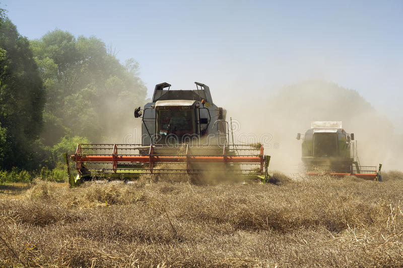 Agriculture - Combines. (harvesters) on the field royalty free stock photography
