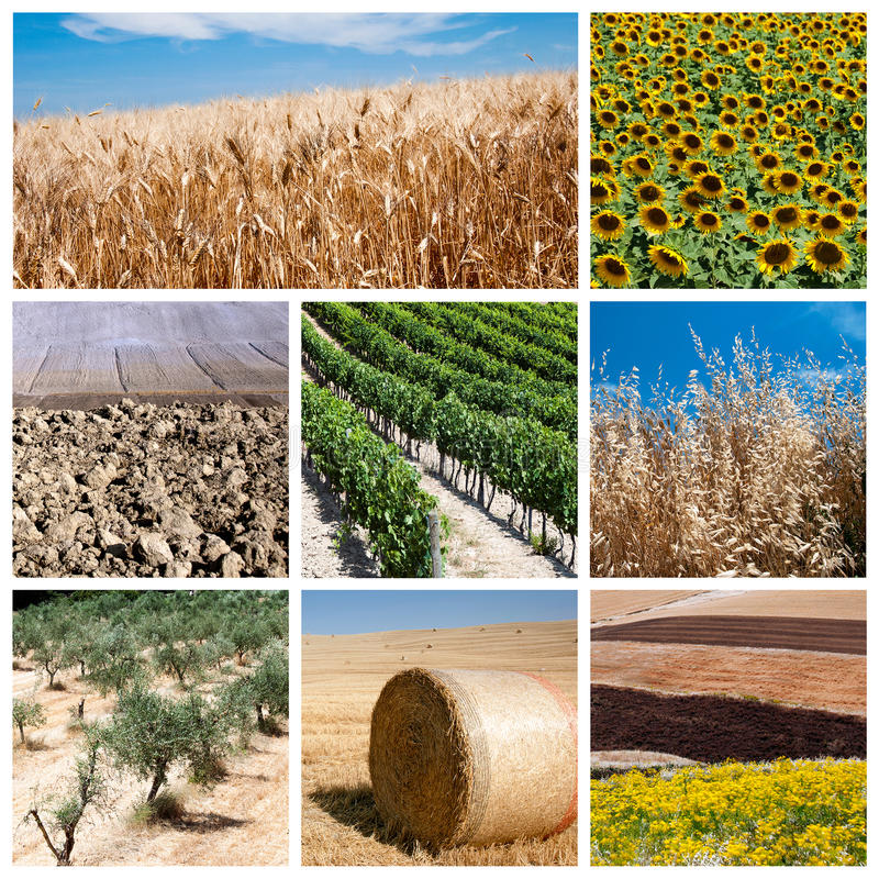 Agriculture concept. Agriculture collage - a collage of photos about agriculture theme royalty free stock photo