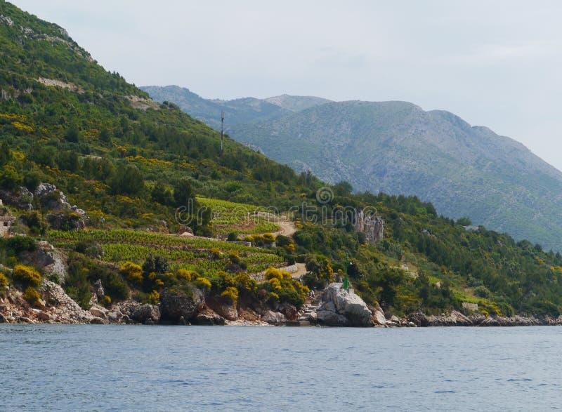Agriculture croate sur la péninsule Peljesac images libres de droits