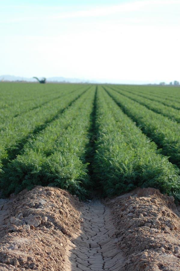 Agriculture de désert images stock