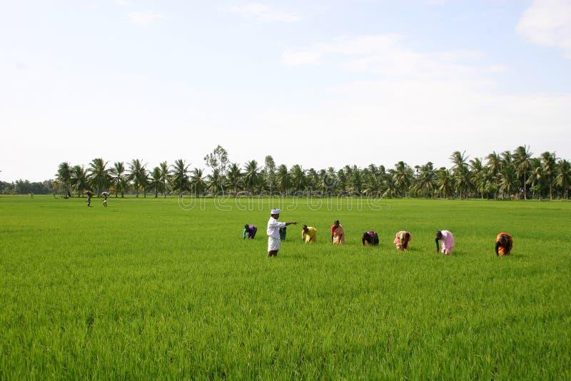 Agriculture de l'Inde photo stock