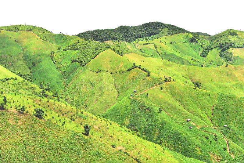Agriculture de montagne dans le secteur de Chaloem Phra Kiat photo stock