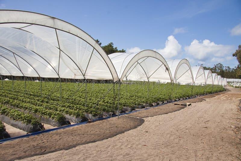 Agriculture de production de serre chaude photographie stock libre de droits