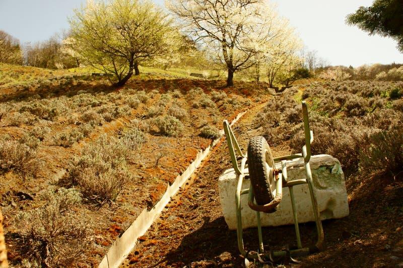 Agriculture des fleurs photographie stock libre de droits