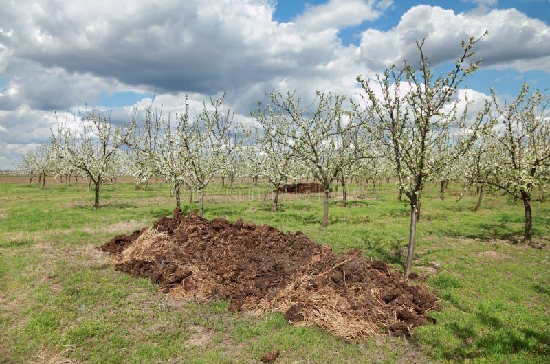 Agriculture, engrais dans le verger photo stock