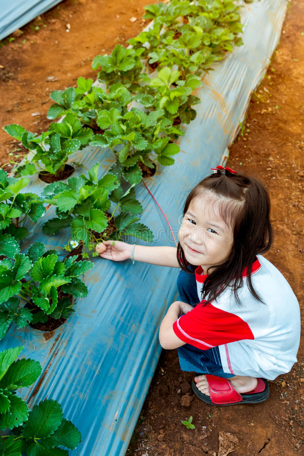 Agriculture farm. Happy asian child smiling and showing fresh st royalty free stock photography