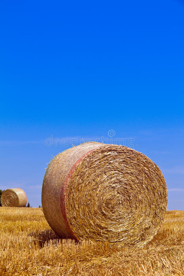 Agriculture. Field royalty free stock image