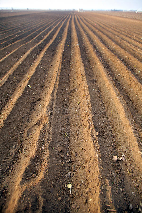 Download Agriculture Field Royalty Free Stock Photo - Image: 22167865
