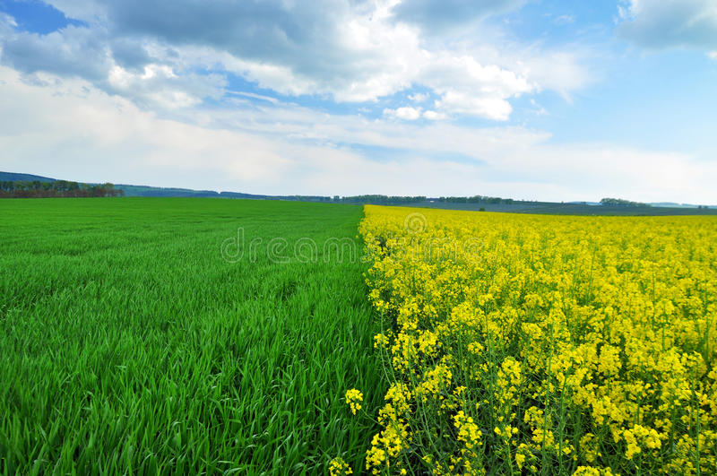 Agriculture field stock image