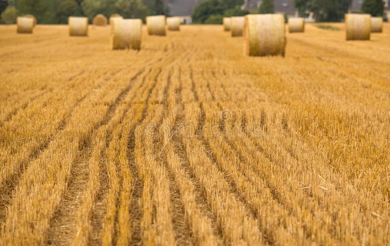 Agriculture field details royalty free stock photo