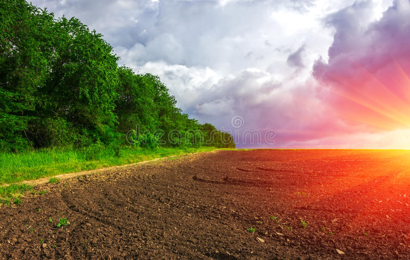 Agriculture. field for planting with clouds on the horizon at su. Agriculture. prepared the field for planting with clouds on the horizon at sunset stock image