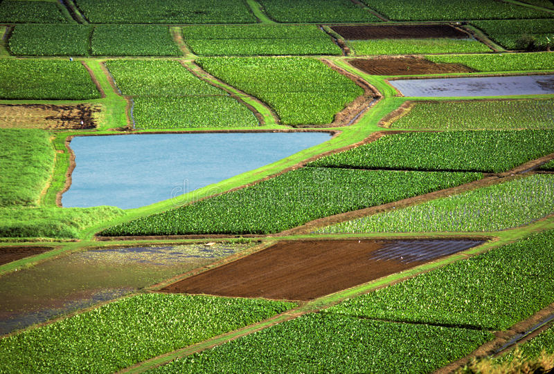 Agriculture fields royalty free stock photography