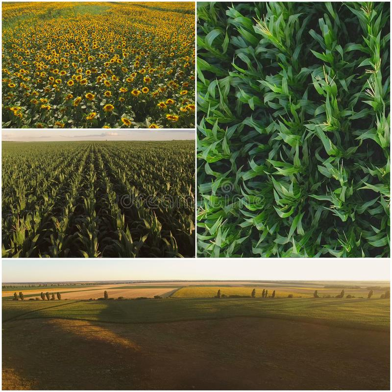 Agriculture fields collage. royalty free stock images