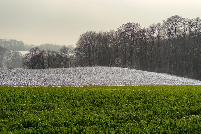 Agriculture fields partially covered with snow royalty free stock images