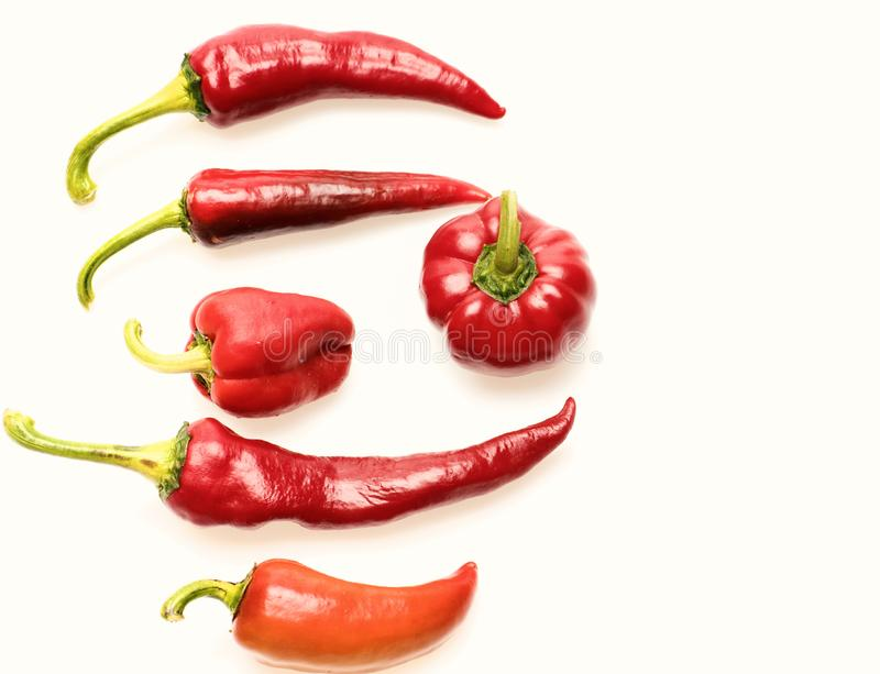 Agriculture and fresh food concept. Chili peppers of red color. Isolated on white background. Set of mexican spicy peppers of different shapes. Paprika royalty free stock photos