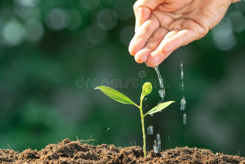 Agriculture. Growing plants. Plant seedling. Hand nurturing and royalty free stock photo