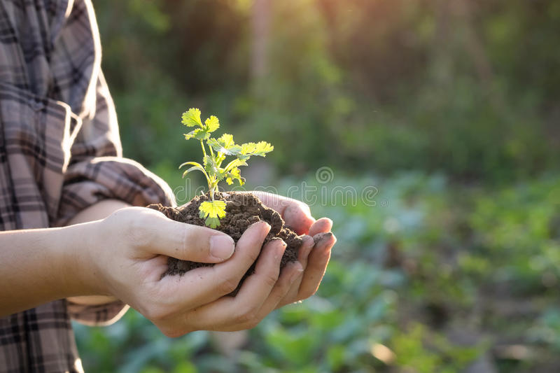 Agriculture hand on baby tree. stock photos