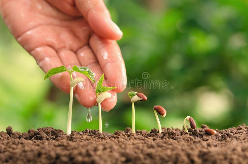 Agriculture hand nurtur watering young plants growing step on so stock image