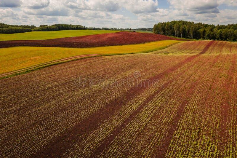Agriculture harvest natural plantation on sunny day. Agricultural enviromental nautral plantation on sunny day. Natural landscape royalty free stock image