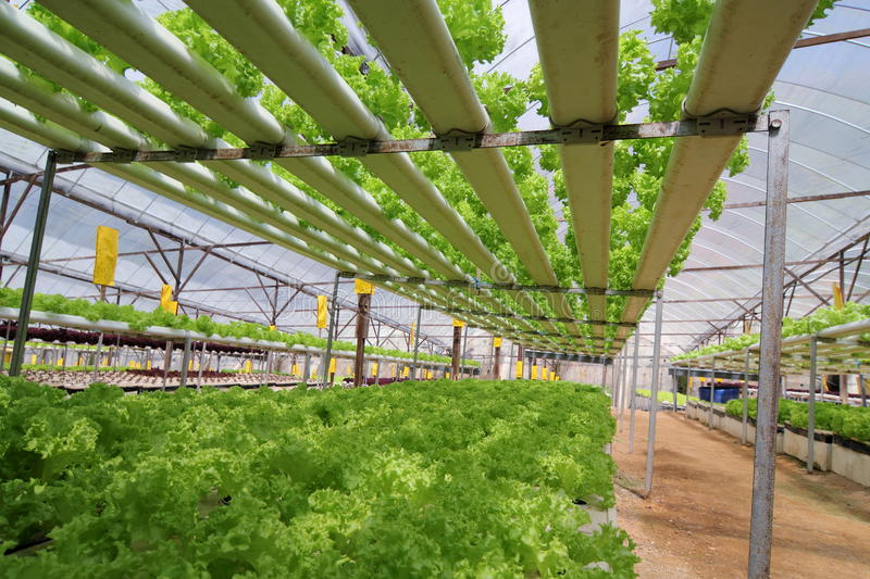 Agriculture - Hydroponic Plantation 01. Organic Hydroponic Vegetable Plantation at Cameron Highlands, Malaysia stock images